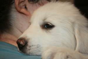 baby-wild-animals:  I decided to get a new puppy in honor of National Puppy Day!: baby-wild-animals:  I decided to get a new puppy in honor of National Puppy Day!