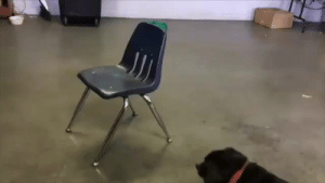 babyanimalgifs:A dog's clever solution.: babyanimalgifs:A dog's clever solution.