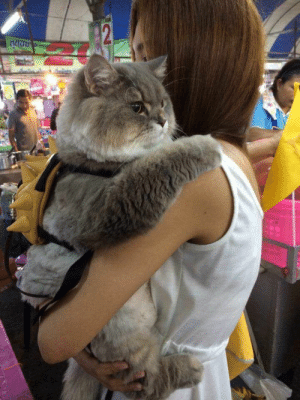 babyanimalgifs:A very big boy: babyanimalgifs:A very big boy