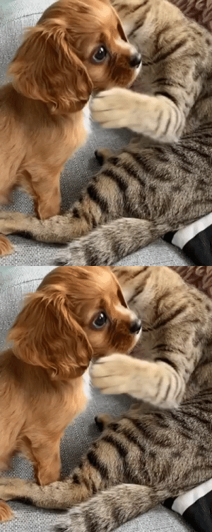 babyanimalgifs:  Best buds (via): babyanimalgifs:  Best buds (via)