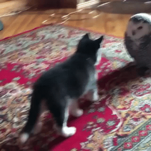 babyanimalgifs:Best friends: babyanimalgifs:Best friends
