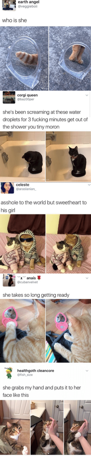 babyanimalgifs: Cat tweets: babyanimalgifs: Cat tweets