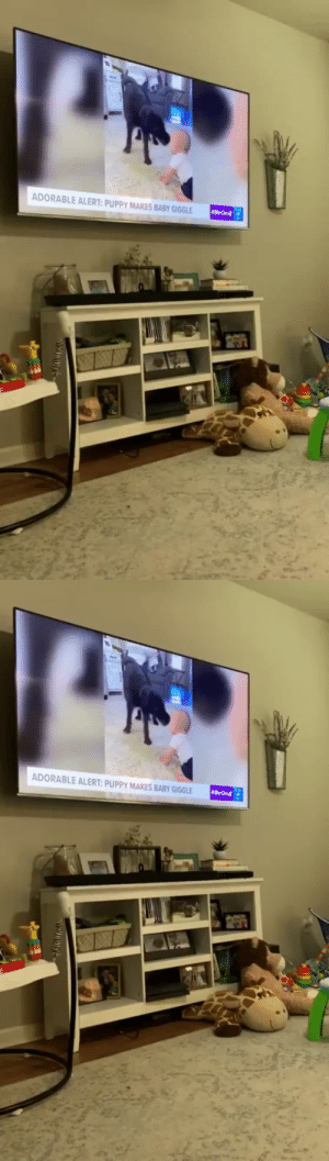 babyanimalgifs:  Dog Jumps For Joy When He Recognizes Himself On TV (Source): babyanimalgifs:  Dog Jumps For Joy When He Recognizes Himself On TV (Source)