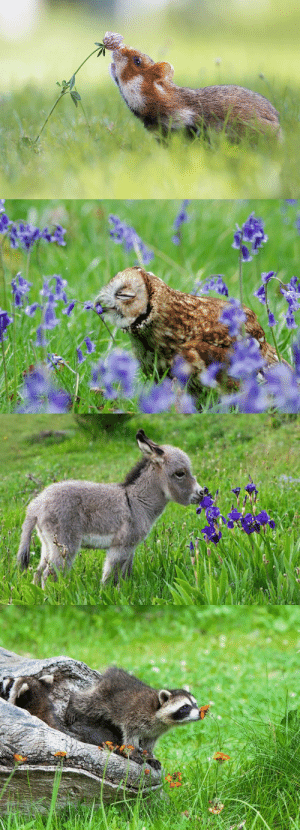 babyanimalgifs:for anyone that's having a bad day, here are pictures of animals sniffing flowers: babyanimalgifs:for anyone that's having a bad day, here are pictures of animals sniffing flowers
