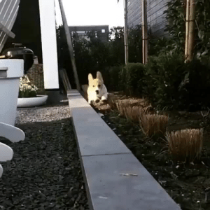 babyanimalgifs: Happiness in slow motion: babyanimalgifs: Happiness in slow motion
