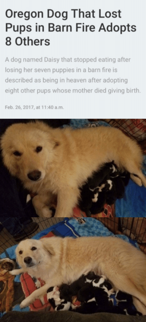 babyanimalgifs:  I'm crying: babyanimalgifs:  I'm crying