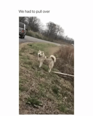 babyanimalgifs:  I feel like we all talk like this to dogs 😂(Credit: @milkandmoths): babyanimalgifs:  I feel like we all talk like this to dogs 😂(Credit: @milkandmoths)
