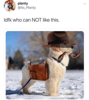 babyanimalgifs:  Indiana bones: raiders of the lost barkvia @golden.mylokin: babyanimalgifs:  Indiana bones: raiders of the lost barkvia @golden.mylokin