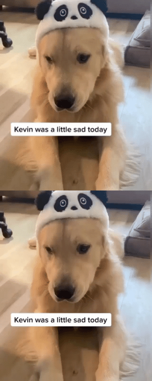 babyanimalgifs:  Kevin's great adventure (via @agoldennamedkevin): babyanimalgifs:  Kevin's great adventure (via @agoldennamedkevin)