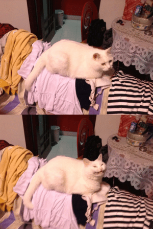babyanimalgifs:me thinking of a funny joke i told last year: babyanimalgifs:me thinking of a funny joke i told last year