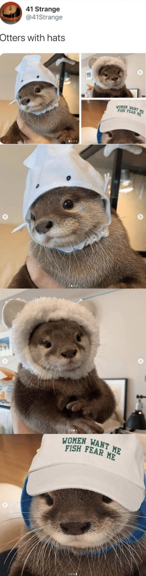 babyanimalgifs:   omg the last one 😂: babyanimalgifs:   omg the last one 😂