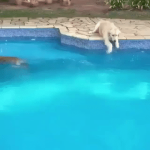 babyanimalgifs:POOL PARTY: babyanimalgifs:POOL PARTY