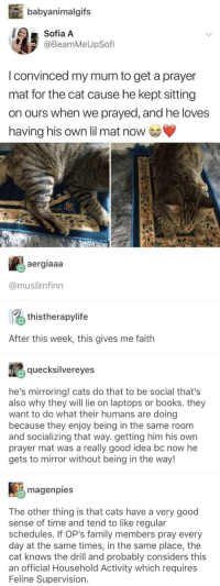 halal kitty: babyanimalgifs  Sofia A  @BeamMeUpSofi  I convinced my mum to get a prayer  mat for the cat cause he kept sitting  on ours when we prayed, and he loves  having his own lil mat now  aergiaaa  @muslimfinn  thistherapylife  After this week, this gives me faith  quecksilvereyes  he's mirroring! cats do that to be social that's  also why they will lie on laptops or books. they  want to do what their humans are doing  because they enjoy being in the same room  and socializing that way. getting him his own  prayer mat was a really good idea bc now he  gets to mirror without being in the way!  magenpies  The other thing is that cats have a very good  sense of time and tend to like regular  schedules. If OP's family members pray every  day at the same times, in the same place, the  cat knows the drill and probably considers this  an official Household Activity which requires  Feline Supervision. halal kitty