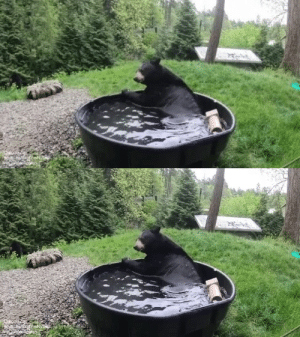 babyanimalgifs:  Taking a beary nice bath (via): babyanimalgifs:  Taking a beary nice bath (via)