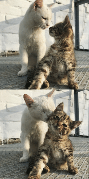 babyanimalgifs:the type of love i need: babyanimalgifs:the type of love i need