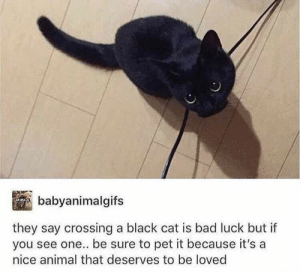 Bad, Love, and Animal: babyanimalgifs  they say crossing a black cat is bad luck but if  you see one.. be sure to pet it because it's a  nice animal that deserves to be loved Cat love