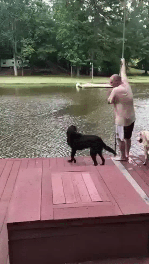 babyanimalgifs:This dog thought it's owner was in trouble… a dog's love is so genuine and pure this is beautiful: babyanimalgifs:This dog thought it's owner was in trouble… a dog's love is so genuine and pure this is beautiful