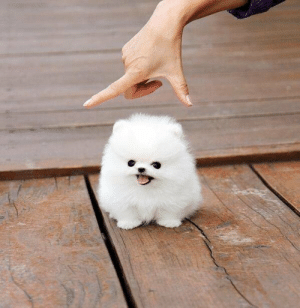 babyanimalgifs:  Tiny cotton wool unit: babyanimalgifs:  Tiny cotton wool unit