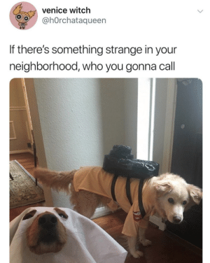 babyanimalgifs:  who else sang the song in their head as they read thisvia: h0rchataqueen: babyanimalgifs:  who else sang the song in their head as they read thisvia: h0rchataqueen