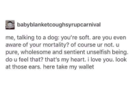 """Dogs, Love, and I Love You: babyblanketcoughsyrupcarnival  me, talking to a dog: you're soft. are you even  aware of your mortality? of course ur not. u  pure, wholesome and sentient unselfish being.  do u feel that? that's my heart. i love you. look  at those ears. here take my wallet <p>Dogs, the most wholesome beings via /r/wholesomememes <a href=""""http://ift.tt/2kQvYD5"""">http://ift.tt/2kQvYD5</a></p>"""