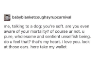 Take it!! wholesomememes: babyblanketcoughsyrupcarnival  me, talking to a dog: you're soft. are you even  aware of your mortality? of course ur not. u  pure, wholesome and sentient unselfish being.  do u feel that? that's my heart. i love you. look  at those ears. here take my wallet Take it!! wholesomememes