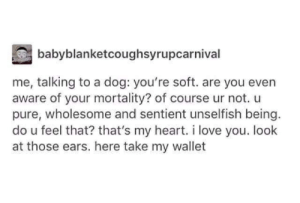 Pure Wholesome: babyblanketcoughsyrupcarnival  me, talking to a dog: you're soft. are you even  aware of your mortality? of course ur not. u  pure, wholesome and sentient unselfish being.  do u feel that? that's my heart. i love you. look  at those ears. here take my wallet