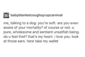 Dogs: babyblanketcoughsyrupcarnival  me, talking to a dog: you're soft. are you even  aware of your mortality? of course ur not. u  pure, wholesome and sentient unselfish being.  do u feel that? that's my heart. i love you. look  at those ears. here take my wallet Dogs