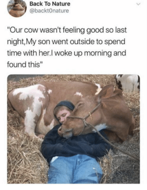 "Tumblr, Blog, and Good: Back To Nature  @backt0nature  Our cow wasn't feeling good so last  night,My son went outside to spend  time with her.l woke up morning and  found this"" awesomacious:  Is this were the term 'cowboy' comes from?"
