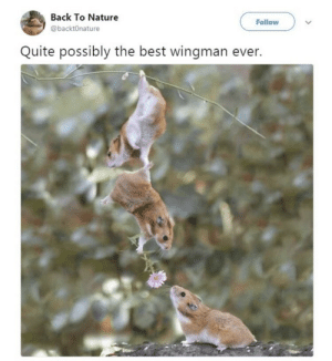 Memes, Best, and Nature: Back To Nature  @backtOnature  Follow  Quite possibly the best wingman ever. https://t.co/H7cSe7ERSc