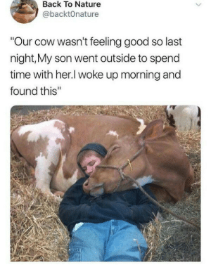 """positive-memes:  Cows make my heart hurt: Back To Nature  @backtOnature  """"Our cow wasn't feeling good so last  night,My son went outside to spend  time with her.l woke up morning and  found this'"""" positive-memes:  Cows make my heart hurt"""