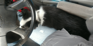 Back when my shotgun rider was more interested in naps than sticking his head out the window and smelling all of the air. Not to worry, he still produces solid awws.: Back when my shotgun rider was more interested in naps than sticking his head out the window and smelling all of the air. Not to worry, he still produces solid awws.
