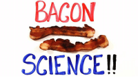 Dank, Science, and Bacon: BACON  SCIENCE!! Hear that sizzling? That's science. https://goo.gl/dMykcj