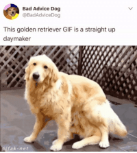 Advice, Bad, and Gif: Bad Advice Dog  @BadAdviceDog  This golden retriever GIF is a straight up  daymaker  ifak-net Truly is https://t.co/XDz1D3RATA