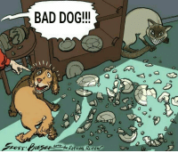 """Bad, Http, and Dog: BAD DOG!!  9)  KITIONAL REVIEW <p>Template from r/insanepeoplefacebok via /r/MemeEconomy <a href=""""http://ift.tt/2Hpxhzw"""">http://ift.tt/2Hpxhzw</a></p>"""