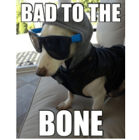 Bones, Memes, and 🤖: BAD TO THE  BONE