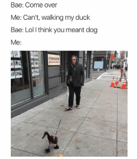 @hilarious.ted has the best animal memes: Bae: Come over  Me: Can't, walking my duck  Bae: Lol l think you meant dog  Me:  PARAGON @hilarious.ted has the best animal memes