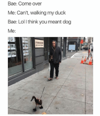 Bae, Come Over, and Lol: Bae: Come over  Me: Can't, walking my duck  Bae: Lol l think you meant dog  Me:  PARAGON @hilarious.ted is my favorite animal memes page