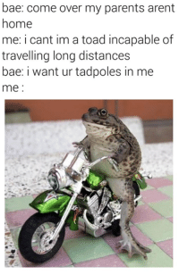 Come Over, Travel, and My Parents Aren't Home: bae: come over my parents arent  home  me: i cant im a toad incapable of  travelling long distances  bae: i want ur tadpoles in me  me Amphetameme pt. III