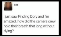 @COMMENTAWARDS 🤔🤔🤔: bae  I just saw Finding Dory and I'm  amazed. how did the camera crew  hold their breath that long without  dying? @COMMENTAWARDS 🤔🤔🤔