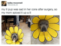 """<p>Awwww little sunflower baby! via /r/wholesomememes <a href=""""http://ift.tt/2xU02jC"""">http://ift.tt/2xU02jC</a></p>: bailey mcconnell  @Mcconnell 34  my lil pup was sad in her cone after surgery, so  my mom spiced it up a lil <p>Awwww little sunflower baby! via /r/wholesomememes <a href=""""http://ift.tt/2xU02jC"""">http://ift.tt/2xU02jC</a></p>"""