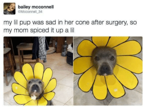 Awwww little sunflower baby!: bailey mcconnell  @Mcconnell 34  my lil pup was sad in her cone after surgery, so  my mom spiced it up a lil Awwww little sunflower baby!