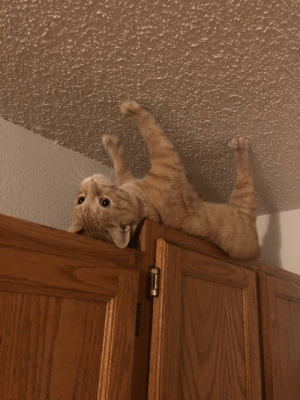 baka-dot-exe:  sasrinthekobold:  the-entire-furry-fandom: ʍoǝɯ meow  Atlas the titan condemned to hold up the sky for eternity : baka-dot-exe:  sasrinthekobold:  the-entire-furry-fandom: ʍoǝɯ meow  Atlas the titan condemned to hold up the sky for eternity