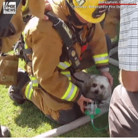 Firefighters in California saved a small dog from a house fire and resuscitated him using a specialized animal oxygen mask.: Bakersfield,  urtesy: Bakersfield Fire D  FOX  NEWS  epartment Firefighters in California saved a small dog from a house fire and resuscitated him using a specialized animal oxygen mask.