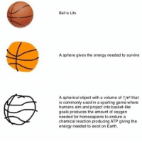 Ball Is Life, Energy, and Memes: Ball is Life  A sphere gives the energy needed to survive  A spherical object with a volume of Yru that  commonly used in a sporting game where  humans aim and project into basket-like  goals produces the amount of oxygen  needed for homosapiens to endure a  chemical reaction producing ATP giving the  energy needed to exist on Earth. *read please* thank you all for your dms :) they are very much appreciated, but don't take it personally if i don't respond. if you are sending me pictures then i probably won't respond but if you do say something (like dming me for promo ;))))) then i will respond :) but yeah sorry if i don't respond so many people are dming me :))) thanks for reading
