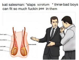Bad, Bad Boys, and Quite: ball salesman: *slaps scrotum *these bad boys  can fit so much fuckin pee in them  Dlood supply  as deferens-  Sperinatocele  Epid dymis  Testis Im quite sure ball salesmen are a thing