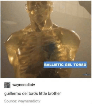 torso: BALLISTIC GEL TORSO  wayneradiotv  guillermo del toro's little brother  Source: wayneradiotv