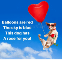 <p>He's on his way! Happy Valentine's Day!!!</p>: Balloons are red  The sky is blue  This dog has  A rose for you <p>He's on his way! Happy Valentine's Day!!!</p>