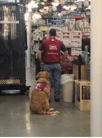 Dog, Job, and Don: BALLYMORE  53)  067 <p>This veteran found it hard to get a job because he needed a service dog so Lowe&rsquo;s hired them both and if you don&rsquo;t think this is the purest thing ever then get out of my face.</p>