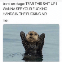 Fucking, Funny, and Band: band on stage: TEAR THIS SIT UP  WANNA SEE YOUR FUCKING  HANDS IN THE FUCKING AIR  me: 😏