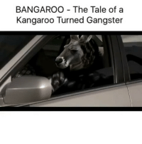 Memes, 🤖, and Tales Of: BANGAROO The Tale of a  Kangaroo Turned Gangster Lmfao @chrisashley_